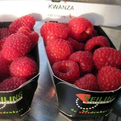 Купить малина Kwanza (Кванза)