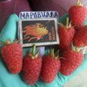 Малина Маравилла (Maravilla)